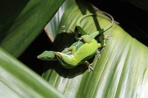 Frisky Fauna: Romance & Mating in the Animal Kingdom