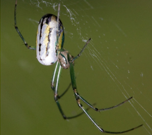 Park After Dark: Spiders in the Park