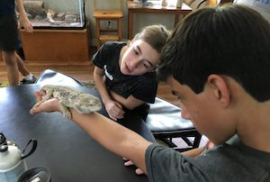 Youth Naturalist Workshop: Snakes, Lizards & Turtles