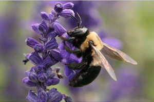 Adult Workshop: Gardening for Pollinators