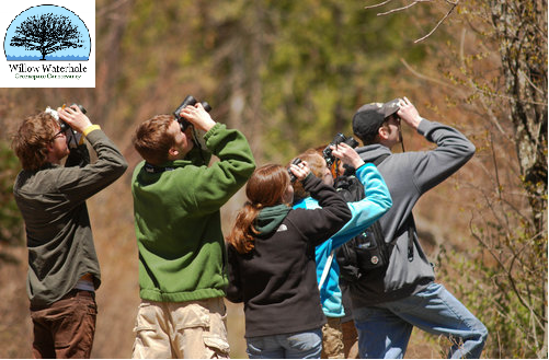 Willow Waterhole Bird Survey