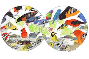Spring Birding Road Trips