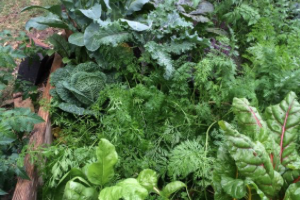 Sustainable, Eco-Friendly Food Gardening