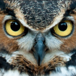 Profile picture of owleyes